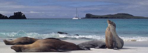 Machu Picchu & Galapagos Islands