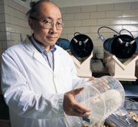 UW Research Professor Henry Lai with a few of his laboratory rats. Photo by Kathy Sauber.