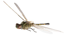 Insectothopter