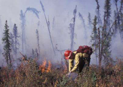 Fire Ecology Laboratory researcher sets a prescribed fire