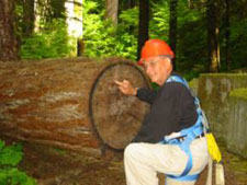 Ben Harrison counts tree rings at Olympic Natural Resources Center
