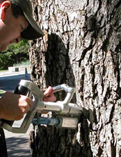 Michael Andreu, '05, inoculates a UW campus tree against Dutch Elm disease.