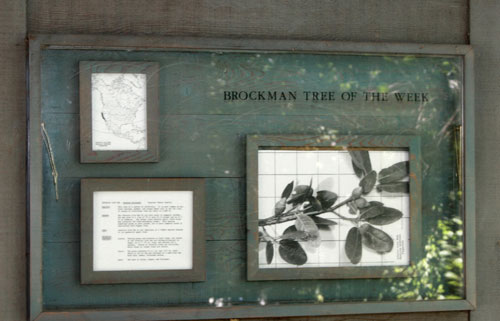 Brockman Tree of the Week display is part of the Brockman Memorial Tree Tour�s public art project