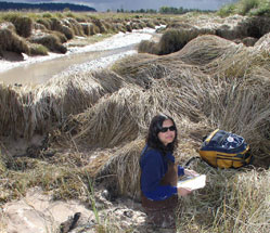 Jeanette Dorner measures a tidal channel in the Nisqually River estuary.