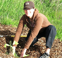Ara Erickson, '04, plants trees in the Union Bay Natural Area�s Centennial Grove.