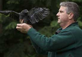 Professor John Marzluff inspects a crow.