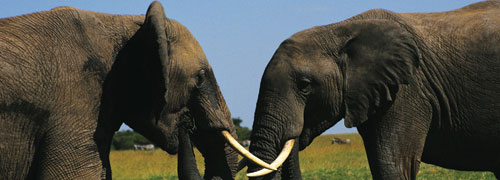 Africa's Wildlife