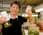 Rose Ann Cattolico displays some of the varieties of algae she studies in her University of Washington laboratory.