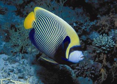Freeing Nemo: Aquarium owners releasing non-native fish could endanger ...