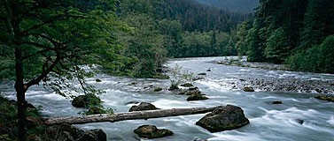 The Elwha River in Olympic National Park.