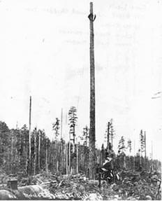 Rigging spar tree