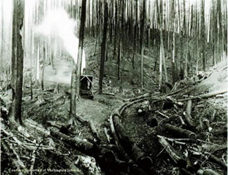 Pacific Lumber Company: Wikis