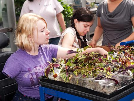 Image of a student observing plants during a botany lab.