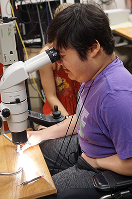A student in a wheelchair uses a microscope.