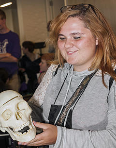 A student looks at the 3-D model of a skull.