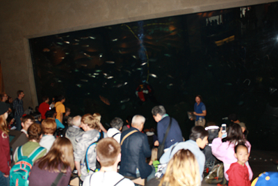 Image of students at the Seattle Aquarium