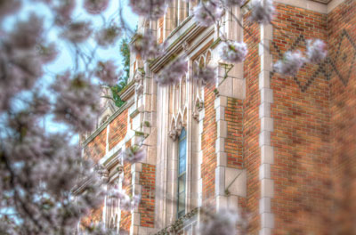 Photo of University of a Washington building with cherry blossoms in the foreground.