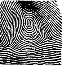 Graphic of a fingerprint showing a whorl.