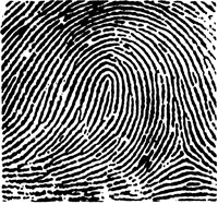 Graphic of a fingerprint showing a loop.