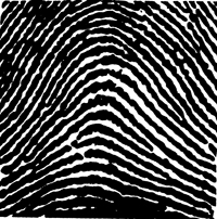 Graphic of a fingerprint showing an arch.