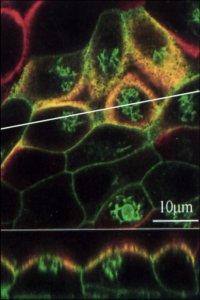 Keck Microscopy Facility image