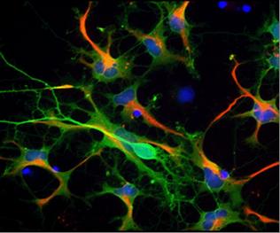 Digital Microscopy Ctr Image