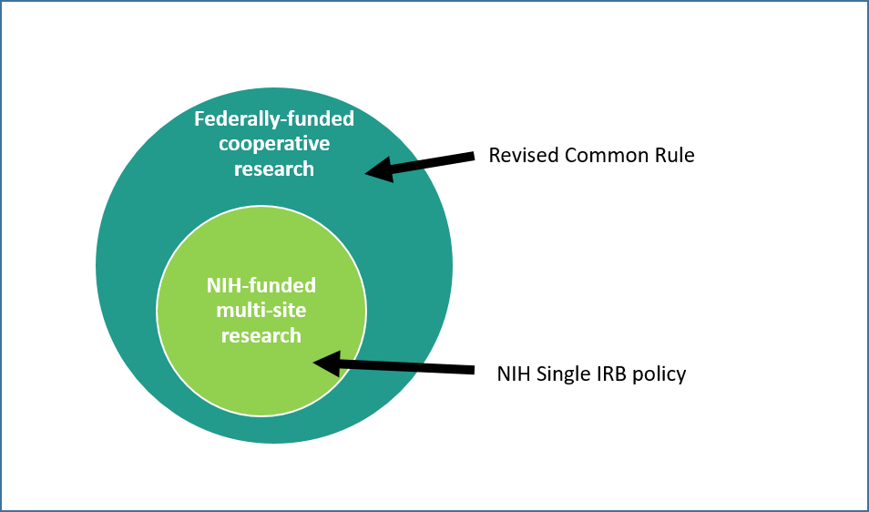 This diagram shows how the revised common rule expands on the NIH single IRB policy by requiring all federally-funded cooperative research to be reviewed by a single IRB