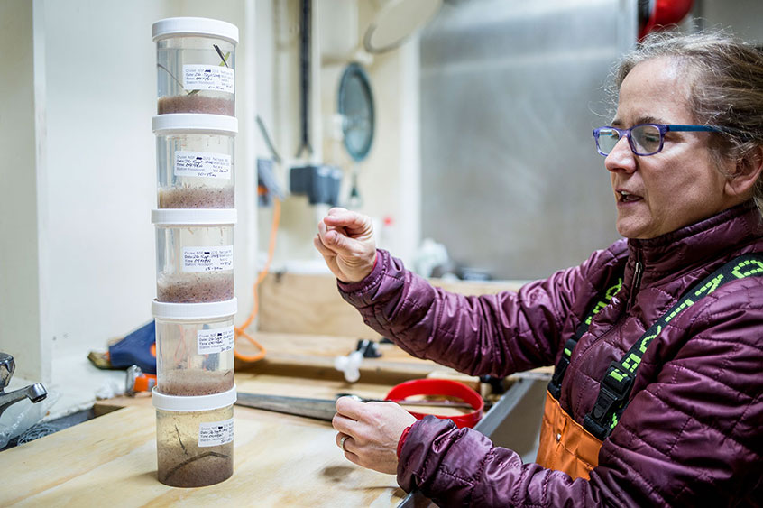 Professor Julie Keister stacks samples from different depths to show how zooplankton migrate in the water column.